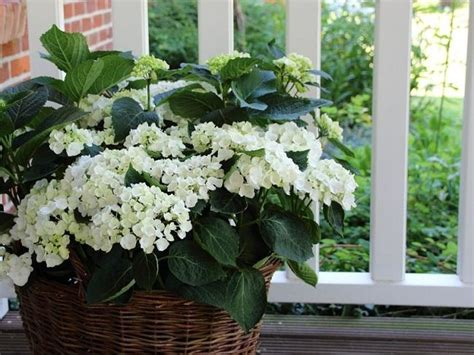 plants  balcony garden