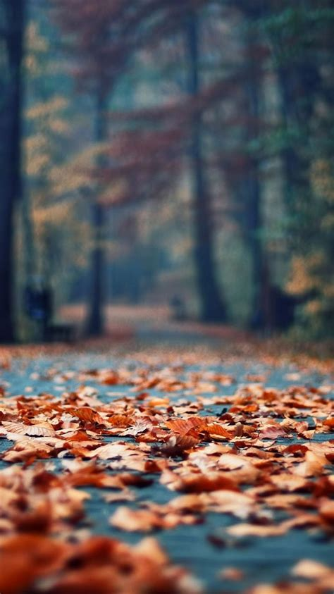 Fall Backgrounds Iphone 8 by Autumn Leaves Park Alley Iphone 6 Wallpaper Iphone