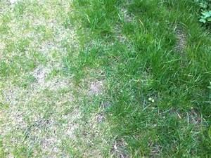 Rasen Wächst Nicht : kalk f r rasen pflanzen f r nassen boden ~ Eleganceandgraceweddings.com Haus und Dekorationen