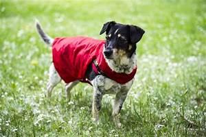 Hunde Sachen Kaufen : upcycling aus einem regenschirm wird ein regenmantel f r hunde anleitungen do it yourself ~ Watch28wear.com Haus und Dekorationen