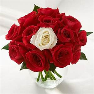 11 Red Roses and 1 White Rose | Flowers in Jordan Delivery ...