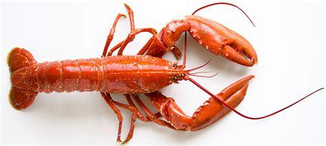 cuisiner le homard vivant le homard cuisine à l 39 ouest