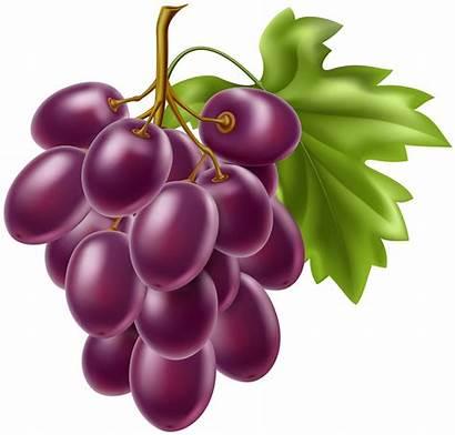 Grapes Clipart Fruit Grape Clip Transparent Cliparts