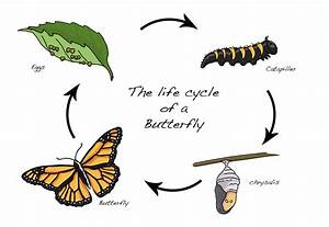 Making Butterflies  The Life Cycle Of A Book  U2013 Writing Ie