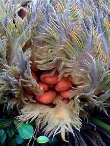 Sago palms can easily cause death - Emergency Vets