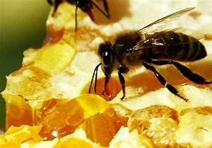 Лечение папилломы медом
