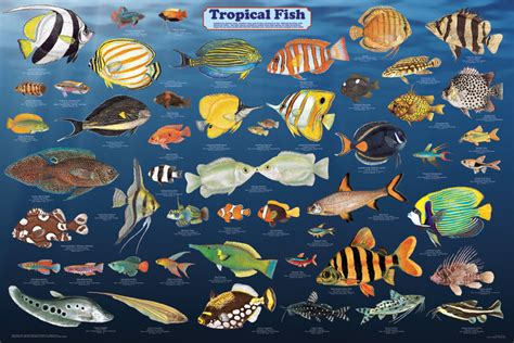 what is your favorite tropical fish