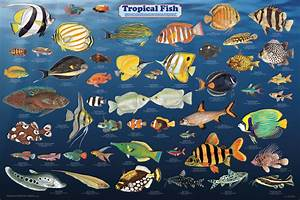 What is your favorite tropical fish?
