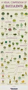 The Ultimate Houseplant Guide  U2014 H U R D  U0026 H O N E Y