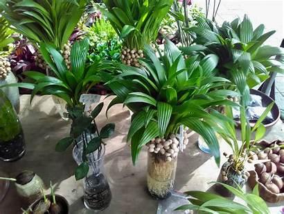 Hydroponic Plants Hydroponics Perennial Farming