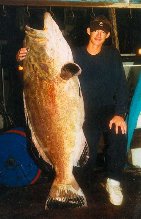 grouper florida record caught fish texas gulf biggest pound ever giant lb mexico fishing bonito largest fishes 2003 june records