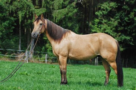 Pin Types of Quarter Horses Images to Pinterest
