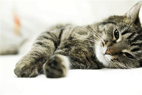 chronische niereninsuffizienz bei katzen kleintierpraxis