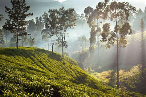 photo gallery ceylon tea trails sri lanka