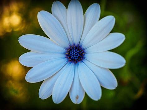 dedicated macro lens   flower shots macro
