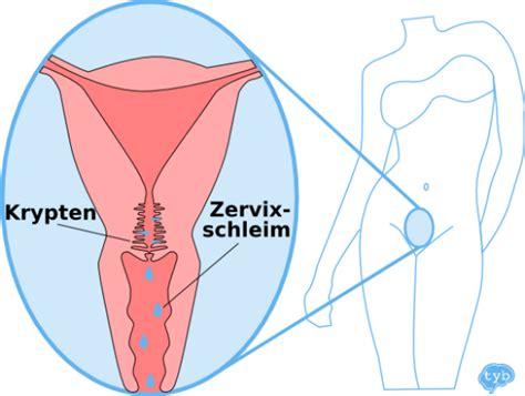 Von Ausfluss Bis Zervixschleim