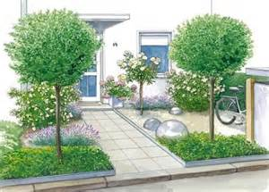 kirschlorbeer balkon über 1 000 ideen zu kirschlorbeer auf kirschlorbeer hecke kirschlorbeer pflanzen