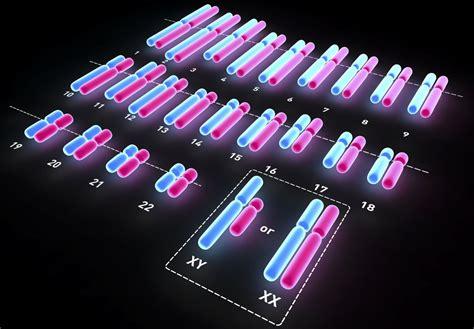 chromosomes determine sex
