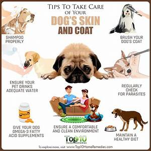 tips to take care of your dogs skin and coat top 10 With caring for your dog