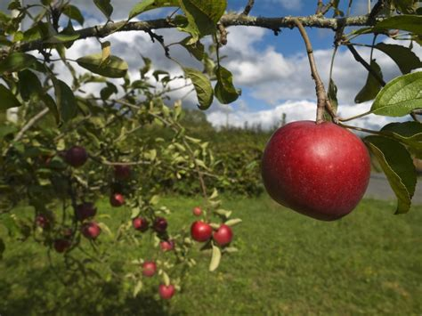 Top 5 Most Common Apple Tree Diseases You Should Watch Out