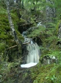 Forest Falls Juneau Alaska