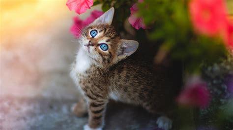 Cute Pets Hd Wallpapers For Desktop 1920 X 1080