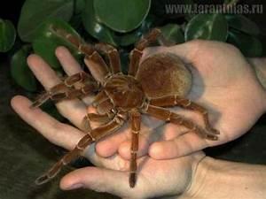 Top 10 Unnervingly Large Invertebrates - Listverse