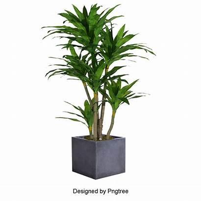 Pot Plant Potted Flower Transparent Plants Pots