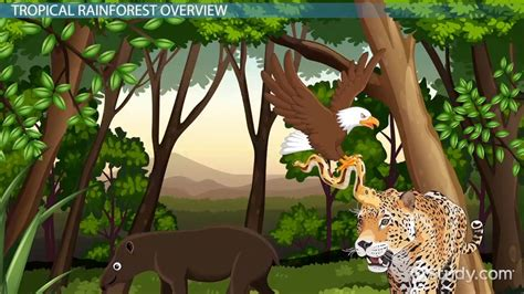 Picture Of Tropical Rainforest Biome picture of
