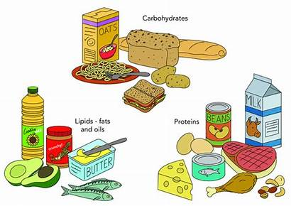 Fats Nutrients Basic Nutrient Carbohydrates Oils Protein