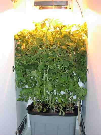 Hydro Closet by Closet Hydroponics A Compact Growroom