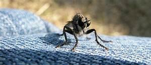 Comment Chasser Les Mouches : chasser les mouches ~ Melissatoandfro.com Idées de Décoration