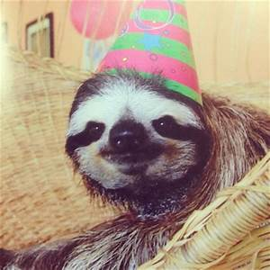 Happy Birthday Baby Sloth | www.pixshark.com - Images ...