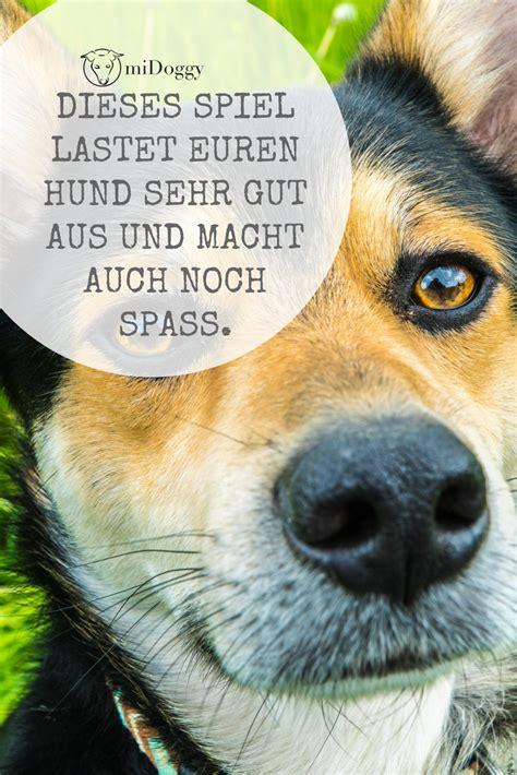 schnueffelmemory hunde hunde hunde sachen und tiere hund