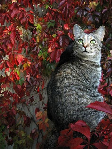 Cats with Fall Foliage