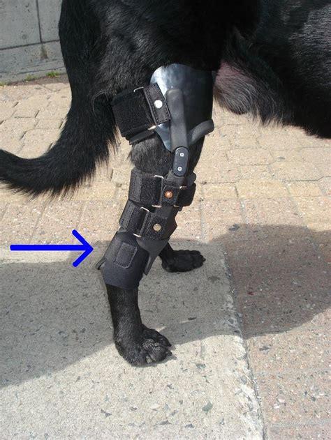 Orthesen Für Hunde