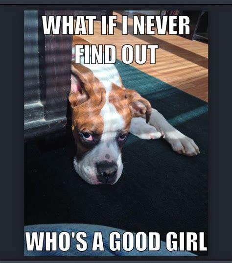 Boxer Meme - funny boxer meme dog memes pinterest funny boxers and funny boxer