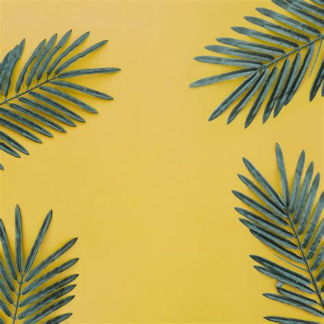 Beautiful Composition With Palm Leaves On Yellow