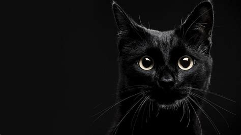 Phone Wallpaper Black Cat by Black Cat Wallpapers 71 Images