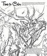 Elk Coloring Summitdaily sketch template