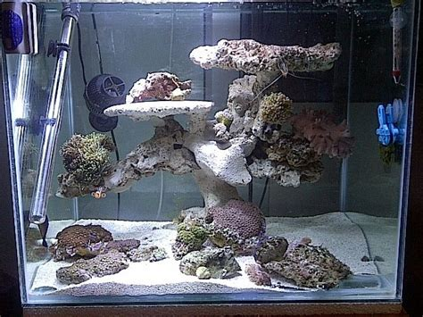 Saltwater Aquascaping Ideas by Pin By Shawn Swetsky On Aquascaping Ideas Saltwater