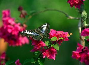 flowers for flower lovers.: Flowers butterfly natural ...