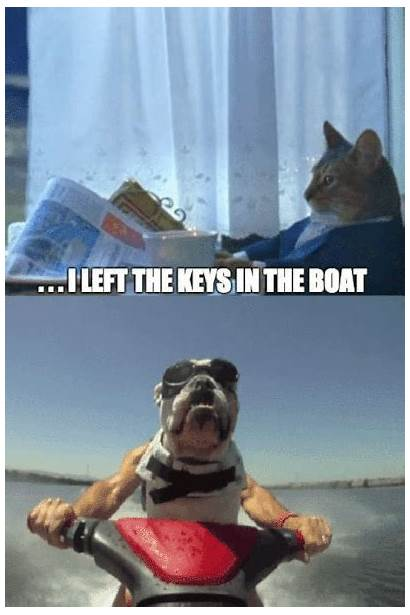 Meme Cat Dog Gifs Boat Trump Left