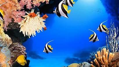 Aquarium Rainwallpaper Deskscapes Adni18 Animation