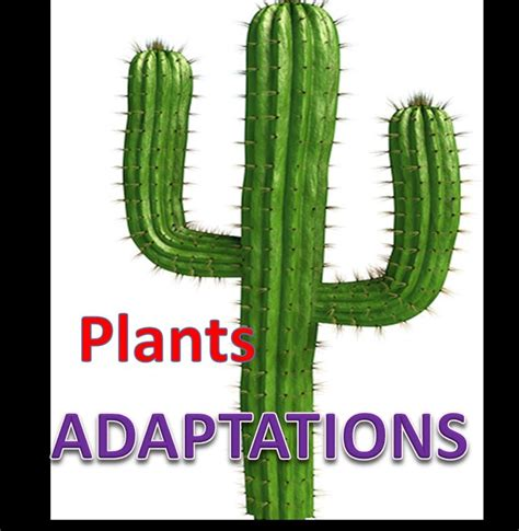 Plant Adaptations Lesson With Quiz Youtube