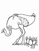Ostrich Coloring Pages Printable Eggs Sheet Animal Coloringcafe Drawing Egg Outline Pdf Wood Ostriches Draw Birds Sheets Getcoloringpages Easy Related sketch template