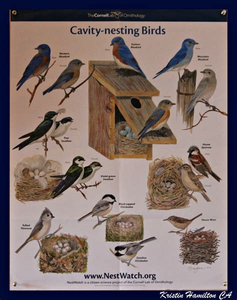 have you visited the cornell ornithology site a great