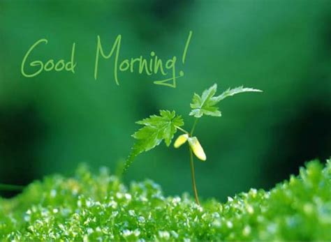 fresh morning  good morning ecards greeting cards