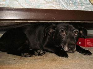 help keep your dog safe and comfortable during fireworks With dog beds under 10