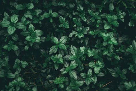 Abstract Green Leaf Wallpaper by 1000 Great Leaves Photos 183 Pexels 183 Free Stock Photos